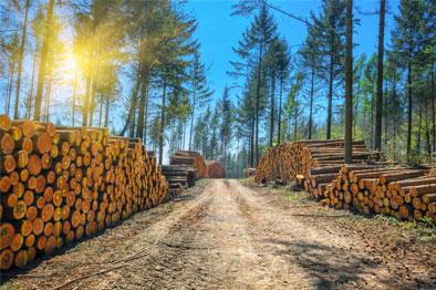 7 lumber-1 Image